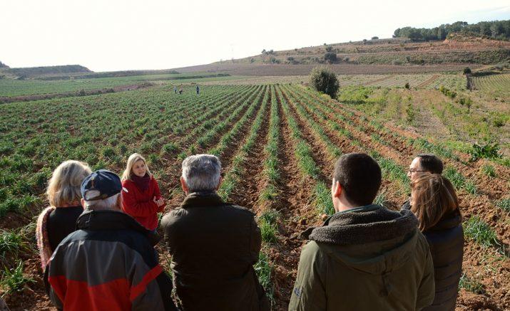 Imatge d'una visita a terres de Nulles on es conreen els calçots (foto: ADERNATS)