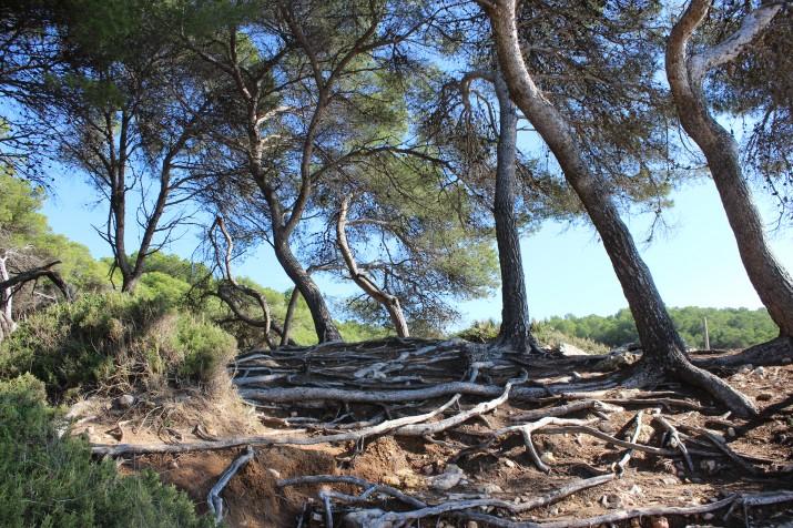 Imatge de l'anella verda de Tarragona, en la zona litorial del Bosc de la Marquesa (foto: Gerard Castells)