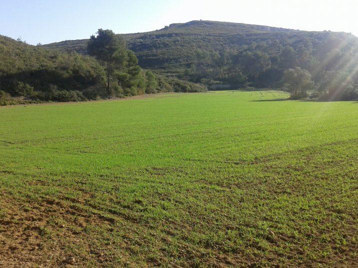 Al terme municipal de Tarragona hi ha espais agrícoles i de natura. Foto: FET a TARRAGONA