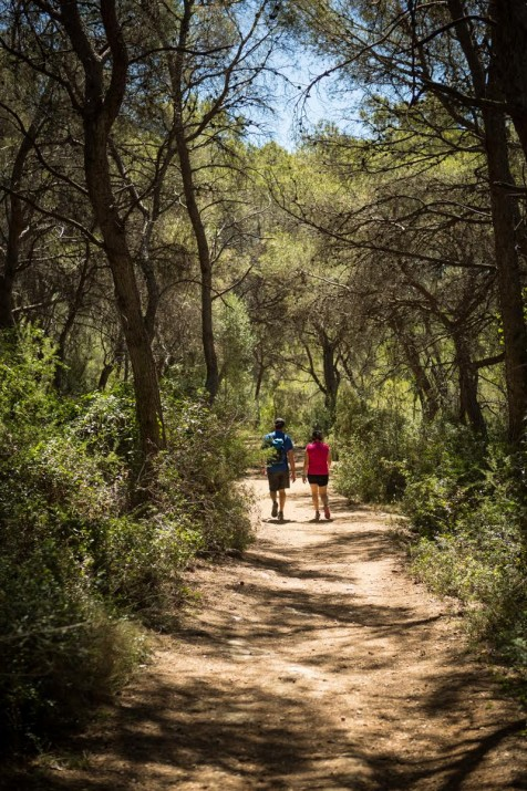 Un dels camins de l'espai natural de la Punta de la Móra - Bosc de la Marquesa. Foto: DAVID OLIETE